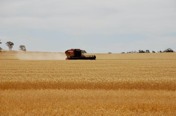 В Україні – рекордний врожай зернових!